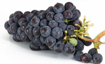 葡萄上白霜是不是代表打农药了 葡萄皮上的白霜有毒吗