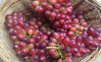 葡萄上一颗一颗的白点是什么东西 葡萄上有白色点点能吃吗