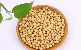 黄豆是毛豆变来的吗 发芽的黄豆吃了要紧吗