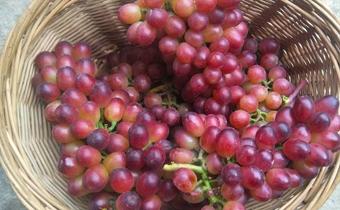 买回来的葡萄太酸了怎么办 吃葡萄为什么酸牙