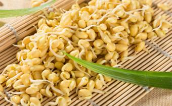 黄豆芽没炒熟吃了会中毒吗 黄豆芽生的可以吃吗