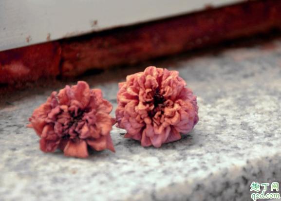 枯萎的花是什么垃圾 枯萎的花草是干垃圾还是湿垃圾1