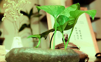 植物绿萝去甲醛吗 哪些方法去甲醛最有效