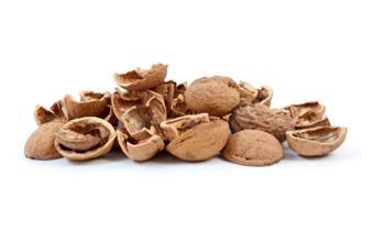 坚果壳属于什么垃圾 坚果壳是厨余垃圾吗