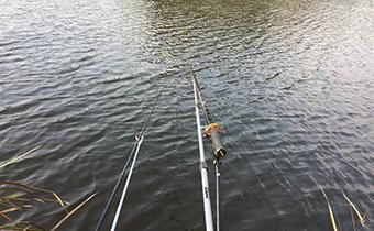 霜降钓鱼选择什么地方 霜降钓鱼深水还是浅水