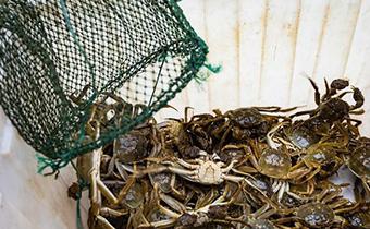 买的大闸蟹吃不完怎么办 吃不完的大闸蟹怎么保存得久