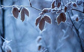 霜降适合吃什么 霜降吃什么比较补身体