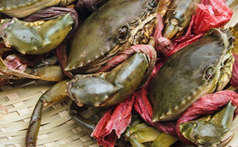 螃蟹就是大闸蟹吗 帝王蟹是不是螃蟹