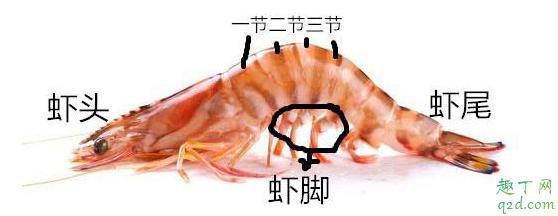 虾头可以吃吗 吃虾头好不好4