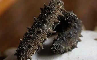 海參能治療糖尿病嗎 糖尿病患者能不能吃海參