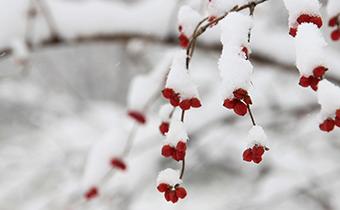 大雪节气都有什么传统习惯 为什么大雪节气要做腌肉
