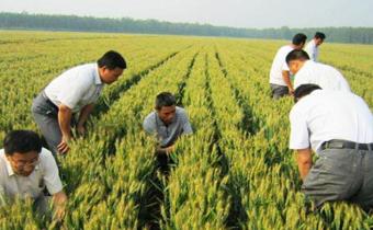 种小麦要深耕土壤吗 小麦免耕播种好不好