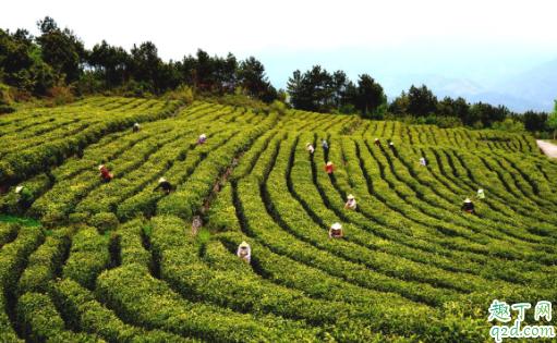 卖茶叶要办什么许可证 卖茶叶要卫生许可证吗3