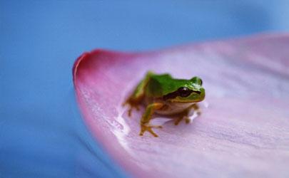 """养殖牛蛙有""""钱途""""吗 牛蛙适合哪些地方养殖"""