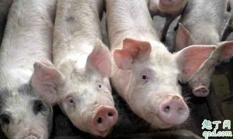 猪肉涨到什么时候就不涨了 猪肉价格什么时候可以恢复正常3