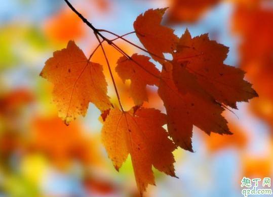 秋天怎么预防过敏性鼻炎 过敏性鼻炎和遗传关系大吗3
