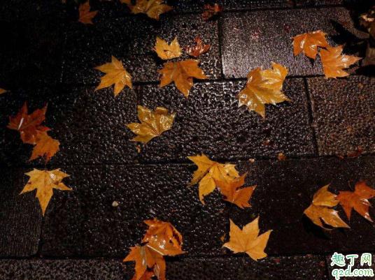 秋天怎么预防过敏性鼻炎 过敏性鼻炎和遗传关系大吗4