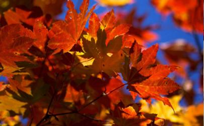 2020什么时候立秋几点几分 2020年的立秋是早秋还是晚秋