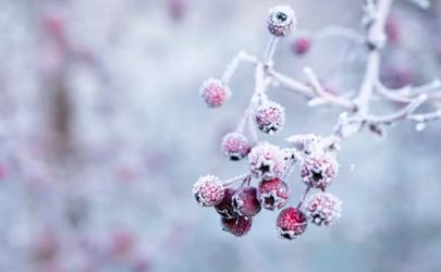 冬至天晴好还是下雨好 冬至天气有什么说法