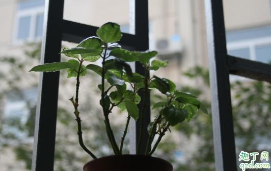 冷水花好养活吗 冷水花怎么养花开旺盛3