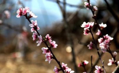 今年什么时候打春2020 打春是立春还是春分