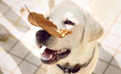 幼犬喝羊奶粉拉稀还能喂吗 狗狗喂食羊奶后闹肚子怎么办