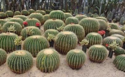 深圳仙湖植物园能求护身符吗 深圳仙湖植物园可以放生吗