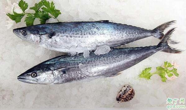 鲅鱼去腥过油好还是焯水好 鲅鱼去腥用什么方法好2
