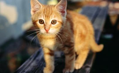 猫咪吃驱虫药会拉虫子吗 猫咪驱虫和疫苗要间隔几天