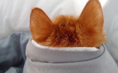 耳朵发炎是中耳炎吗 耳朵发炎了怎么办