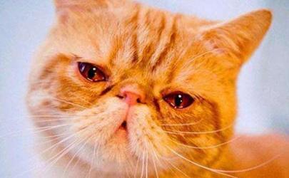 猫流泪是伤心还是生病 猫咪忽然流眼泪是怎么了
