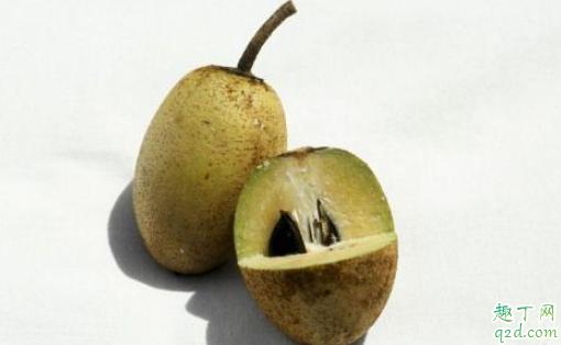 人心果为什么不建议食用 人心果不熟吃了会怎样1