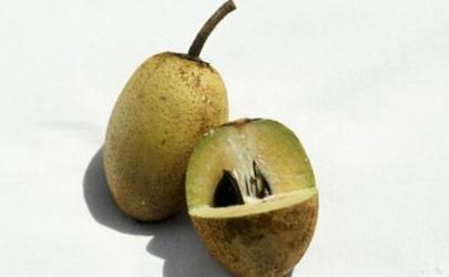 人心果为什么不建议食用 人心果不熟吃了会怎样