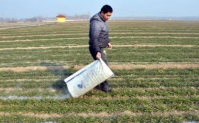 草木灰最适合什么土壤 大蒜什么时候撒草木灰合适