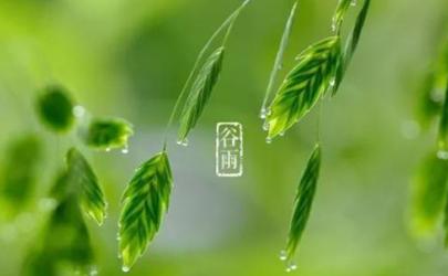 2021年谷雨是几月几号 2021年谷雨节气几点开始