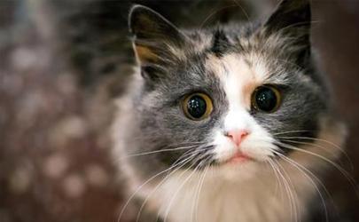 猫咪难产怎么帮着助产 怎么知道猫咪难产