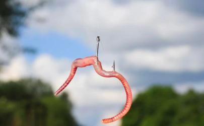 蚯蚓钓鲫鱼是躺底好还是到底好 用蚯蚓做钓如何调漂