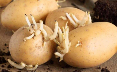 土豆发芽只能丢掉吗 土豆发芽还有什么用处