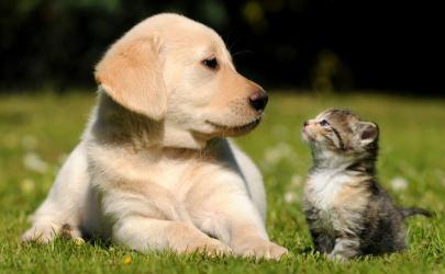 猫狗会传染新型冠状病毒吗 武汉肺炎还能养宠物吗