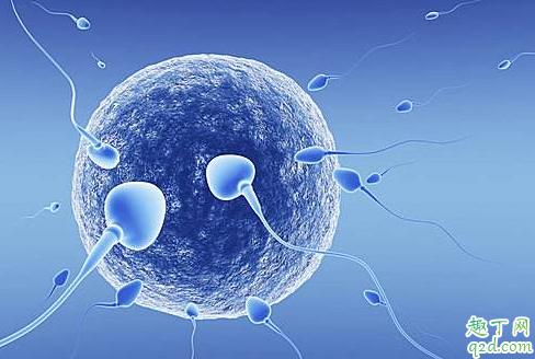 女性绝经后还能怀孕吗  通过药物恢复月经还可以怀孕吗 4