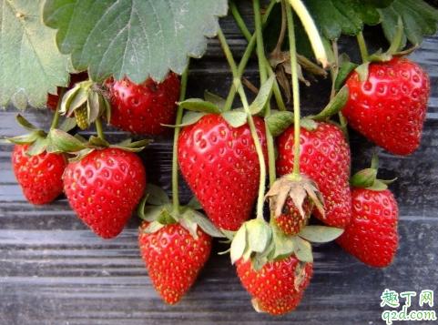 网上买草莓怎么看好坏 网上买草莓注意什么3