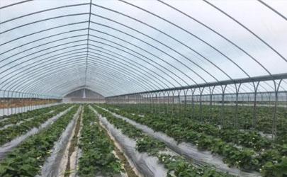 冬季温室大棚如何做好通风 日光温室通风口如何使用
