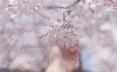 拍樱花穿什么颜色好看 人在樱花下照片怎么拍