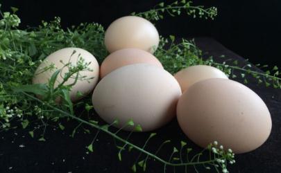荠菜煮鸡蛋要放盐吗 荠菜煮鸡蛋放盐好还是不放盐好