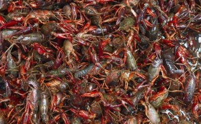 疫情对小龙虾有影响吗 2020湖北小龙虾价格是涨是跌