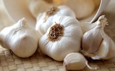发芽的大蒜是不是有毒 蒜发苦了还能吃吗