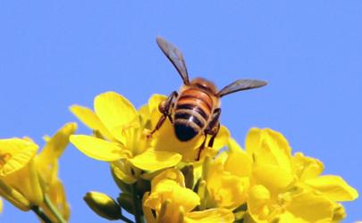 蜜蜂蛰了眼睛肿了可以热敷吗 蜜蜂蛰了眼睛怎么消肿止痒