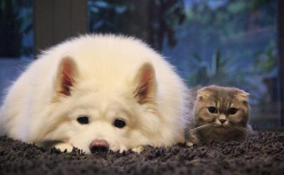狗能吃猫粮罐头吗 狗吃罐头后不吃狗粮怎么办