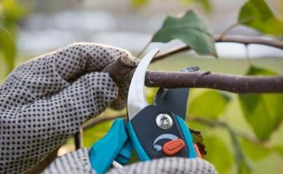 油漆能给果树封口吗 果树剪枝后伤口用什么封住