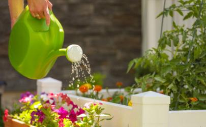 营养液可以天天喷叶面吗 植物营养液可用什么代替
